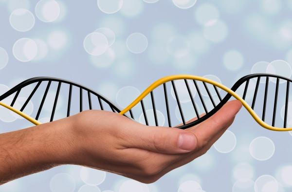 DNA, genetika a šľachtenie