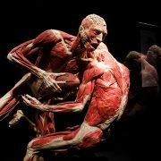 Výstava ľudského tela Body The Exhibition a vraj mŕtvi politickí väzni