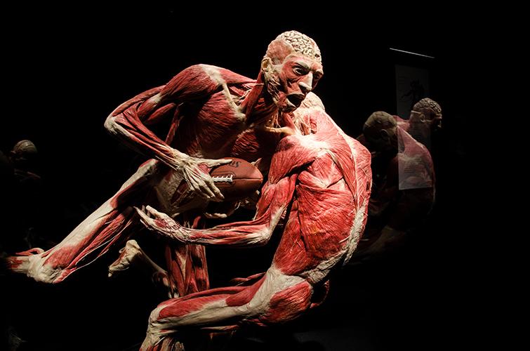 Ludské telo